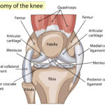 Meniscus Tears Can Be Fixed